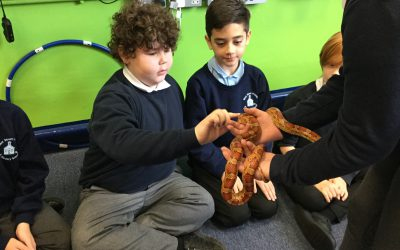 AN ANIMALTASTIC TIME IN YEAR 6!